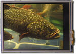 Fish tank photo, modified to appear how the eye perceives the display